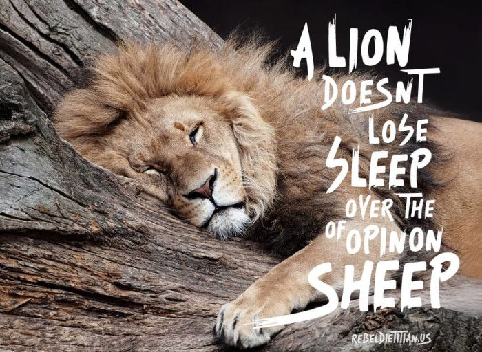 Train Mean Inspirational Quotes Pictures Lion Quotes Sleep Quotes