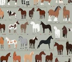 Horses: A Chart of Notable Breeds