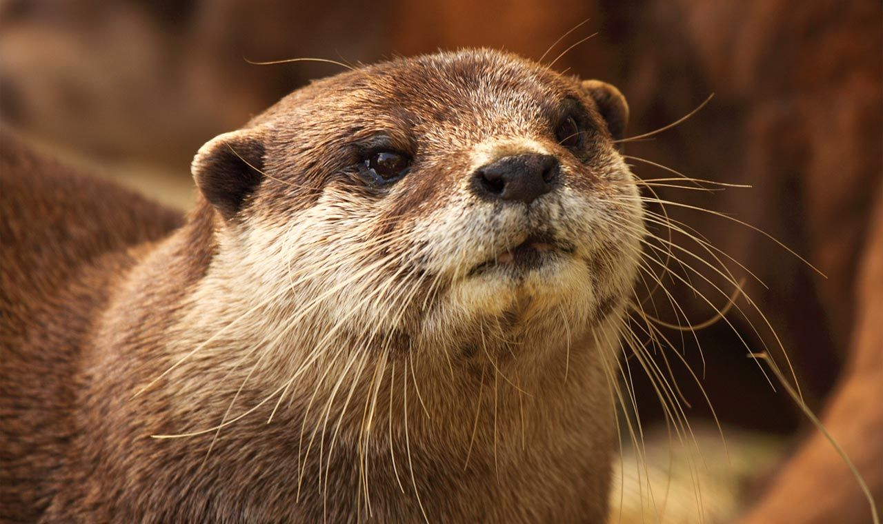 Pin By Alistair Graham On Otters London Places Places Of Interest Otters