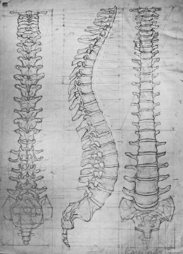 Pin de Character Design References em Character Anatomy | Bones ...