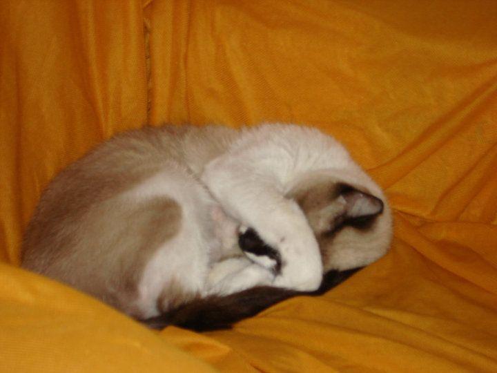 Samanta dormindo...