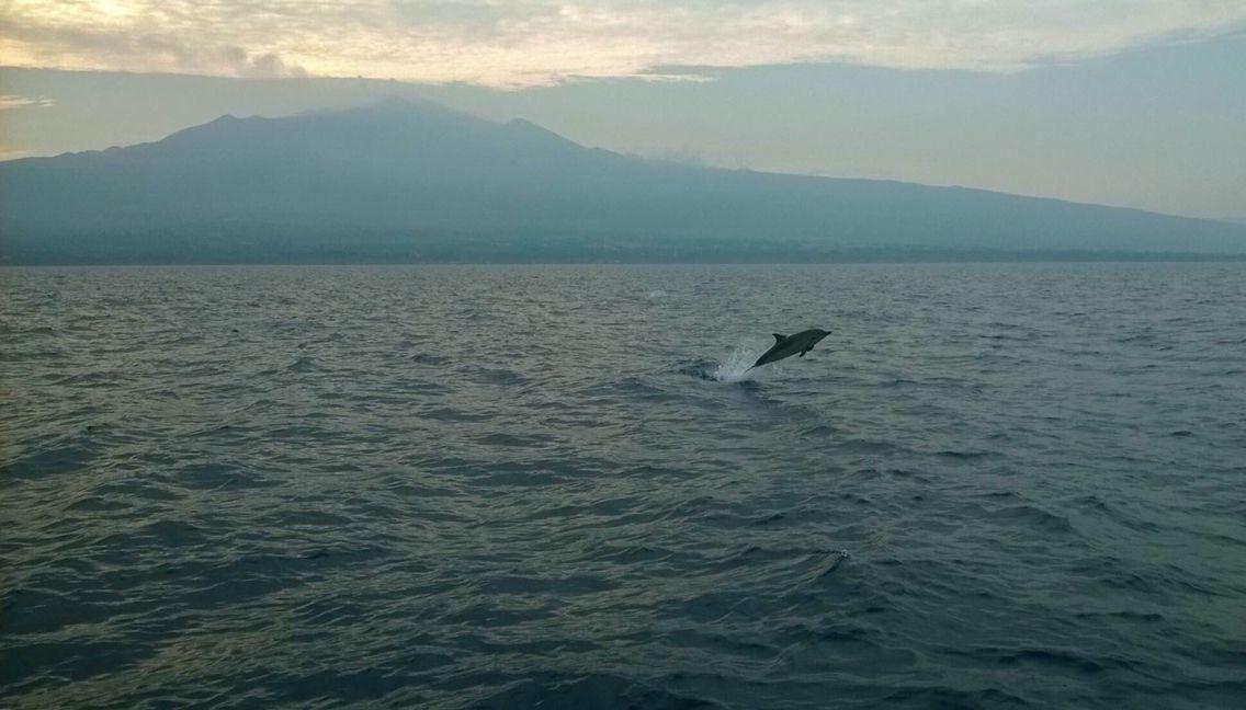 """#Etna e la """"danza"""" di un #delfino al tramonto, lo spettacolo della natura. #Sicilia   ©Photo Credit: Antonino Brischetto"""
