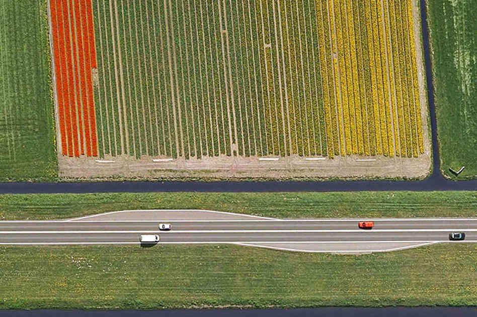 Dutch flower fields Dutch Flower Fields Seen