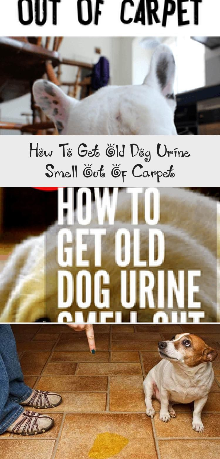 How to get old dog urine smell out of dog urine old