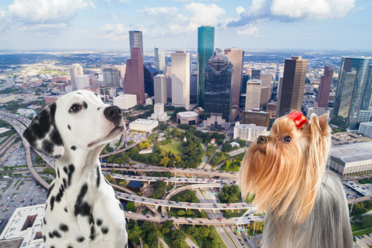 What To Do With Your Dog In Houston Dog Friendly Restaurants More Dog Friends Dogs Dog Friendly Rentals