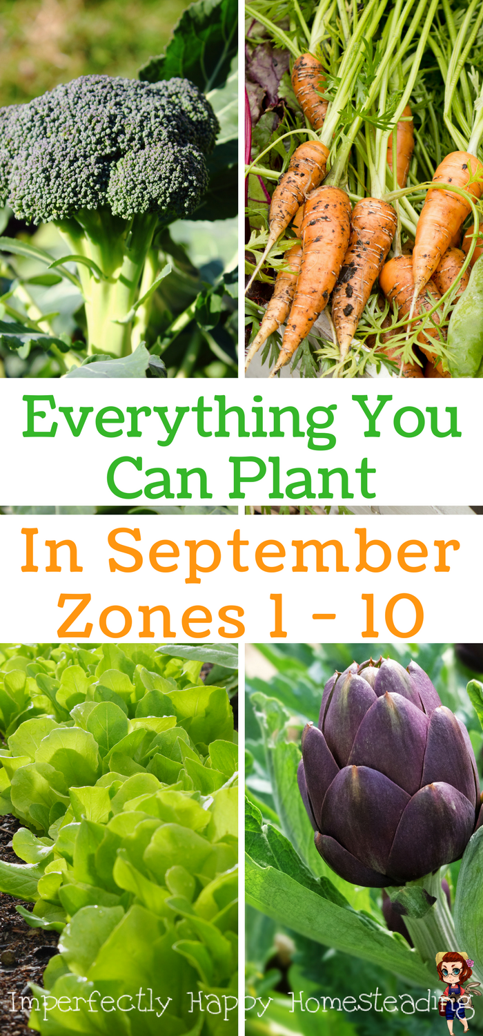 What to Plant in September in Your Vegetable Garden Home