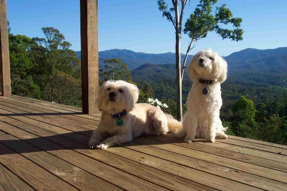 Canine guests at Clovelly cottage Rock Lily - pet friendly