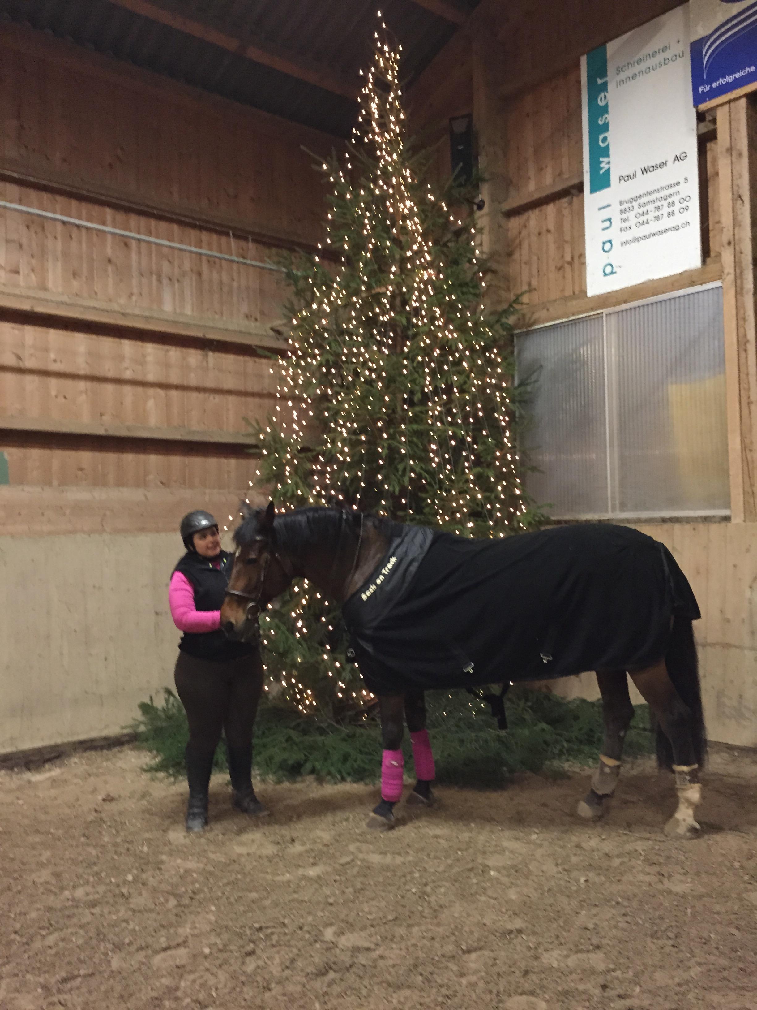 Reiterliche Weihnachtsgeschenke- Last Minute! | reitsport.ch -Blog ...