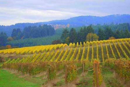 Oregon Wine Country Fall Colors Vineyard Winery And