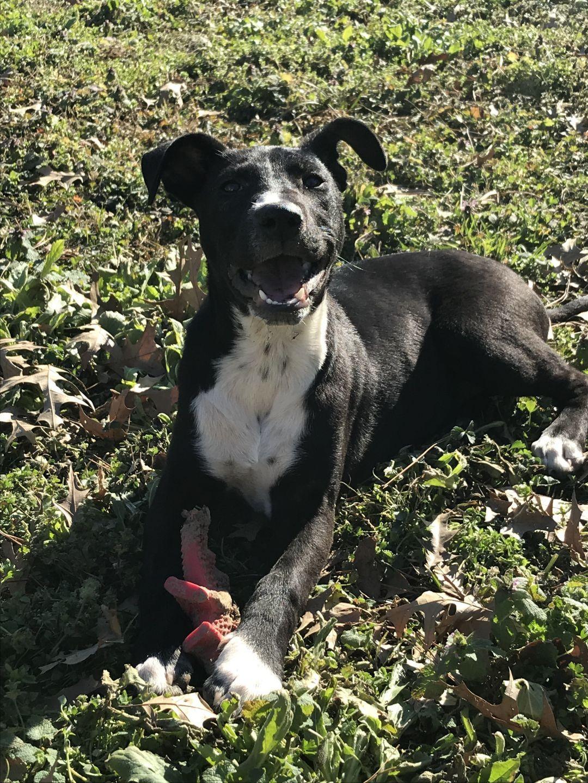 Adopt Naomi on Pet adoption, Dog pounds, I love dogs