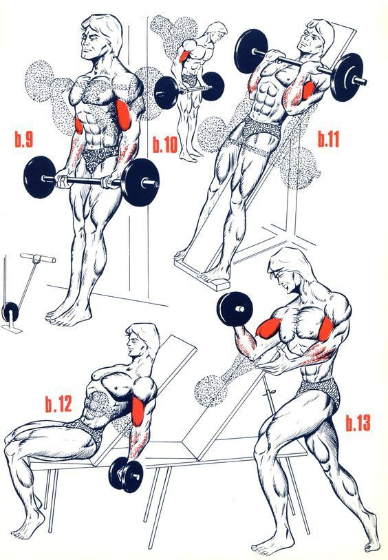 Exercices Biceps - Musculation - FORUM Forme & Sport abdos ...