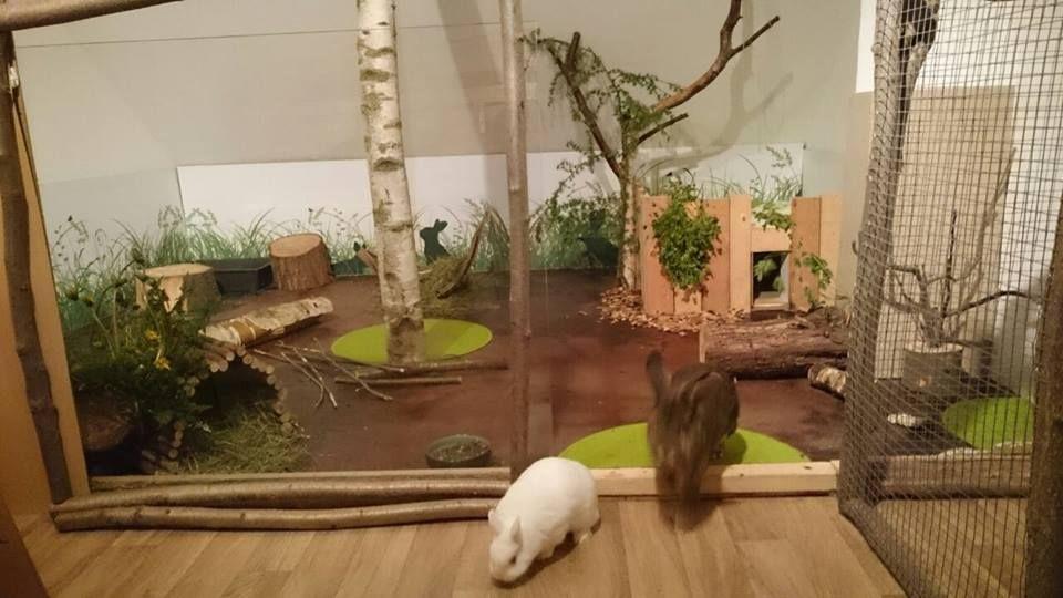 wohnungshaltung bunny stuff pinterest kaninchenhaltung kaninchen und hase. Black Bedroom Furniture Sets. Home Design Ideas