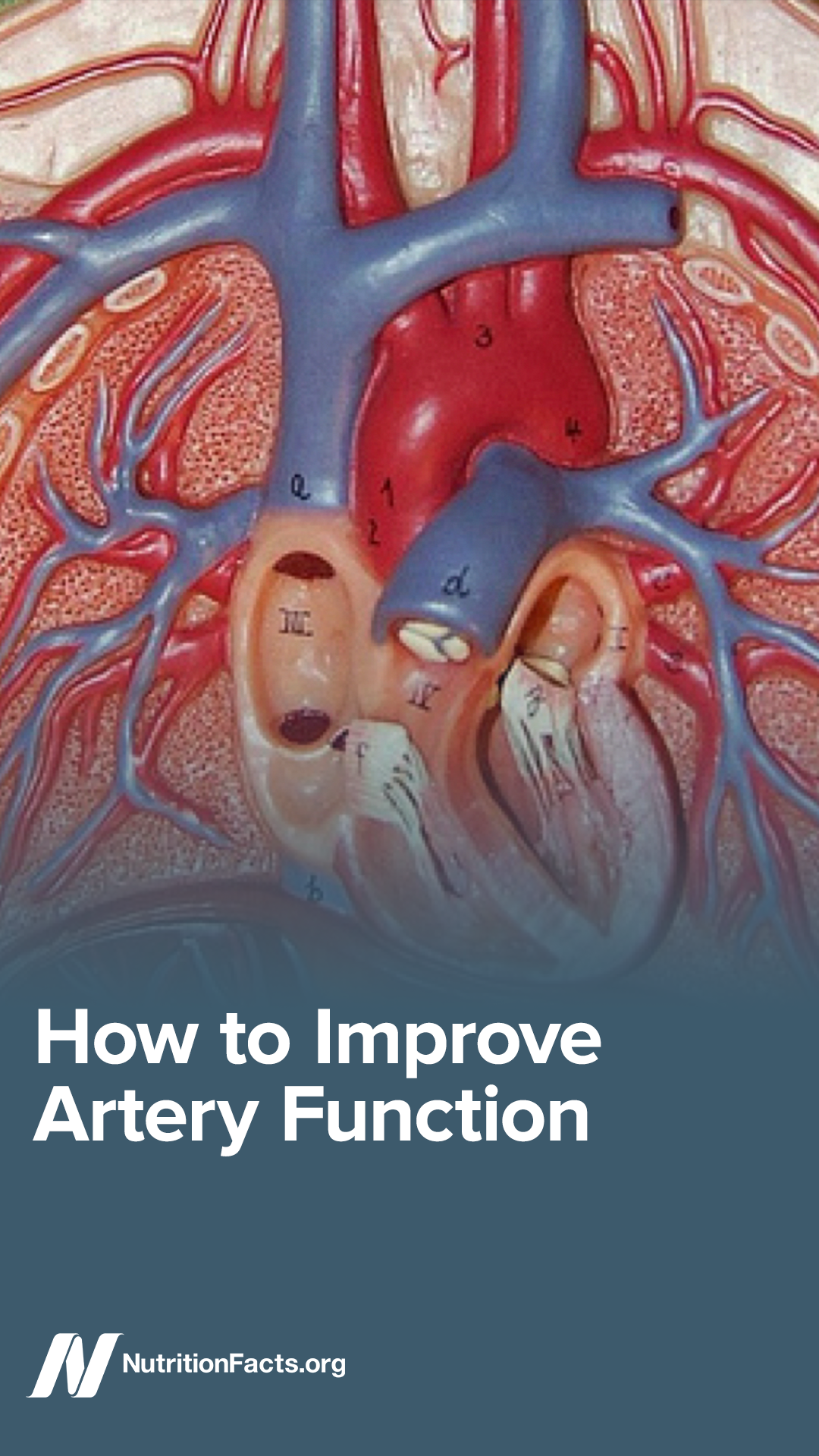 Here S How To Improve Artery Function