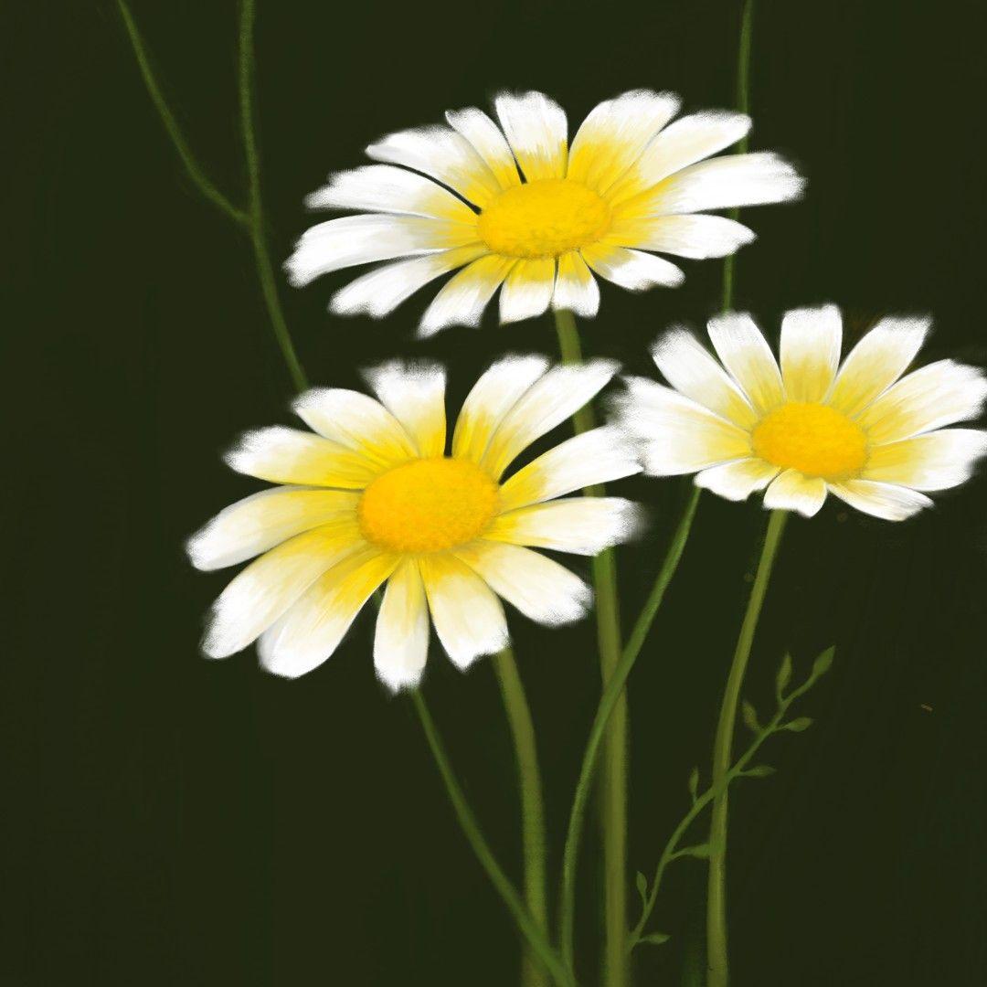 زهور الأقحوان على برنامج Autodesk Sketchbook Plants
