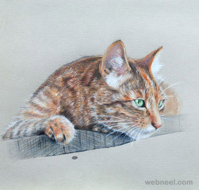30 Beautiful Cat Drawings Best Color Pencil Drawings And Paintings World Cat Day Aug 8 Animal Drawings Realistic Cat Drawing Cat Drawing