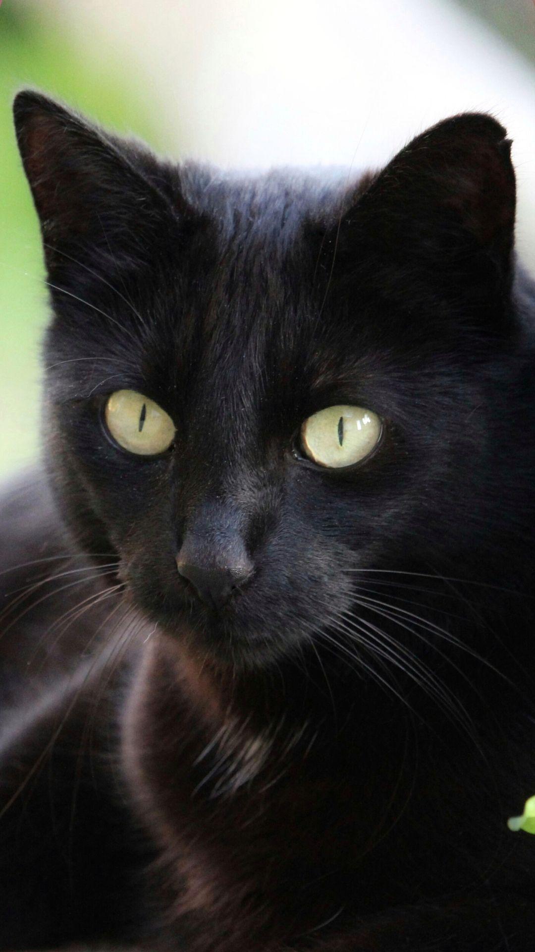 1920x1080 Cute Black Cat Wallpaper Hvgj Animali Immagini Sfondi