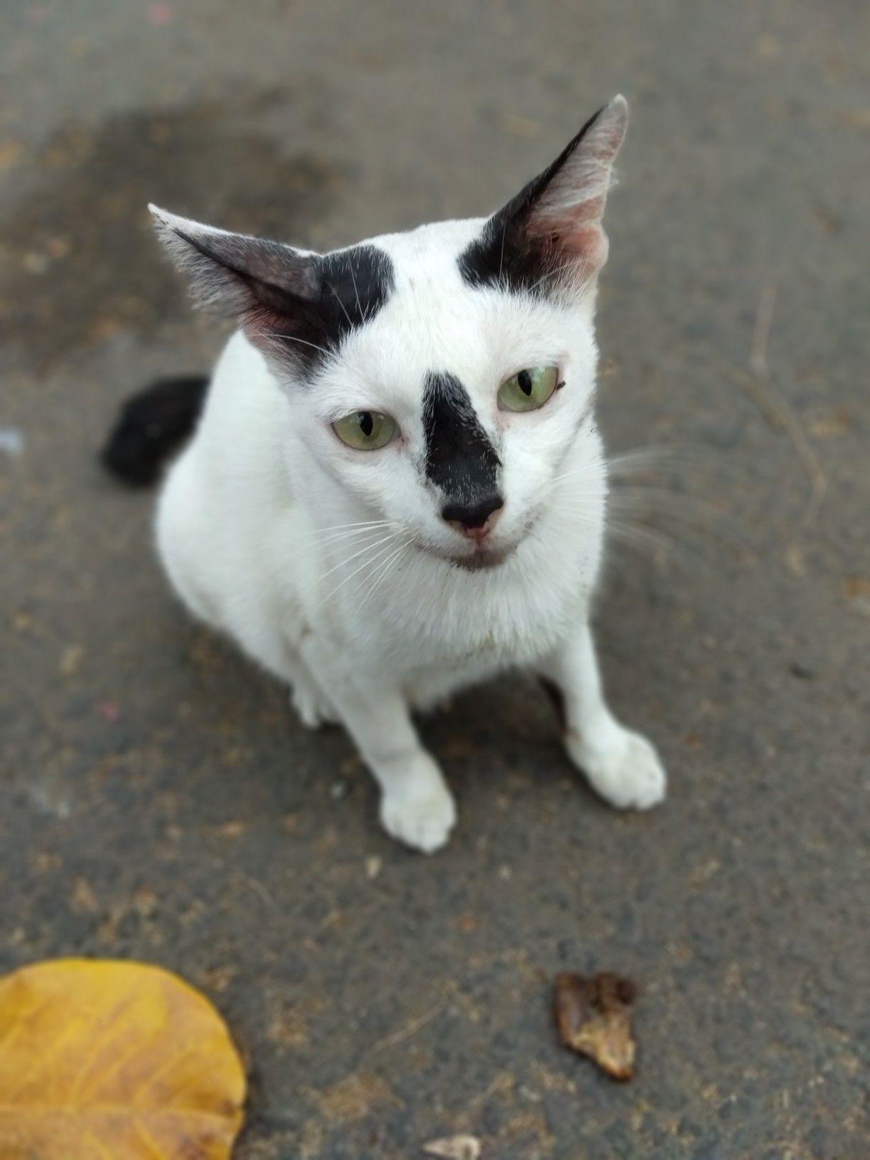 92 Gambar Gambar Kucing Untuk Wallpaper Hp Terbaik
