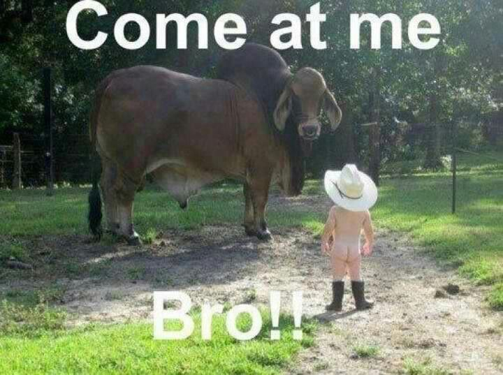 That's a real gangsta cowbaby.