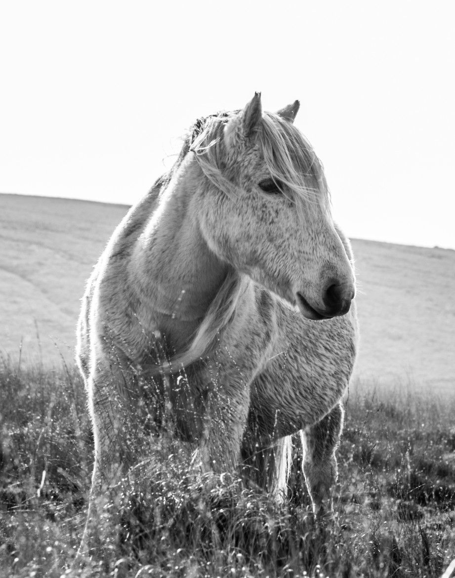 In every horse has its own hidden magic …