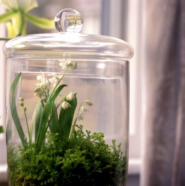 Terrarium Plants A List Of Miniature Tropical Plants That Work
