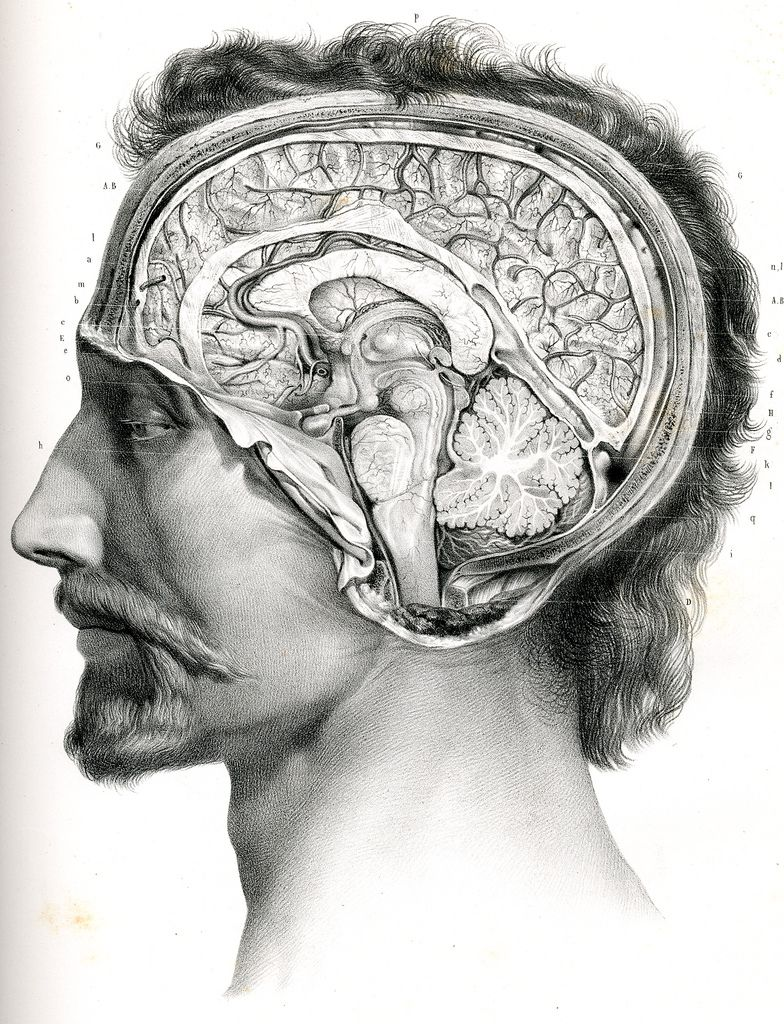 Coupe De L Encephale Sur Le Plan Median Anatomy Art Human Anatomy Art Anatomy Drawing