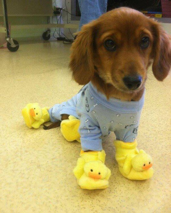 Puppy with duckling feet...Oh My!!