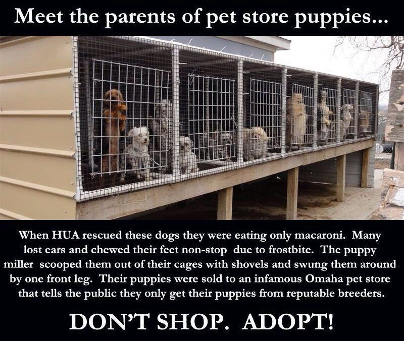 Meet Your New Puppies Parents Chances Are If You Bought Your New