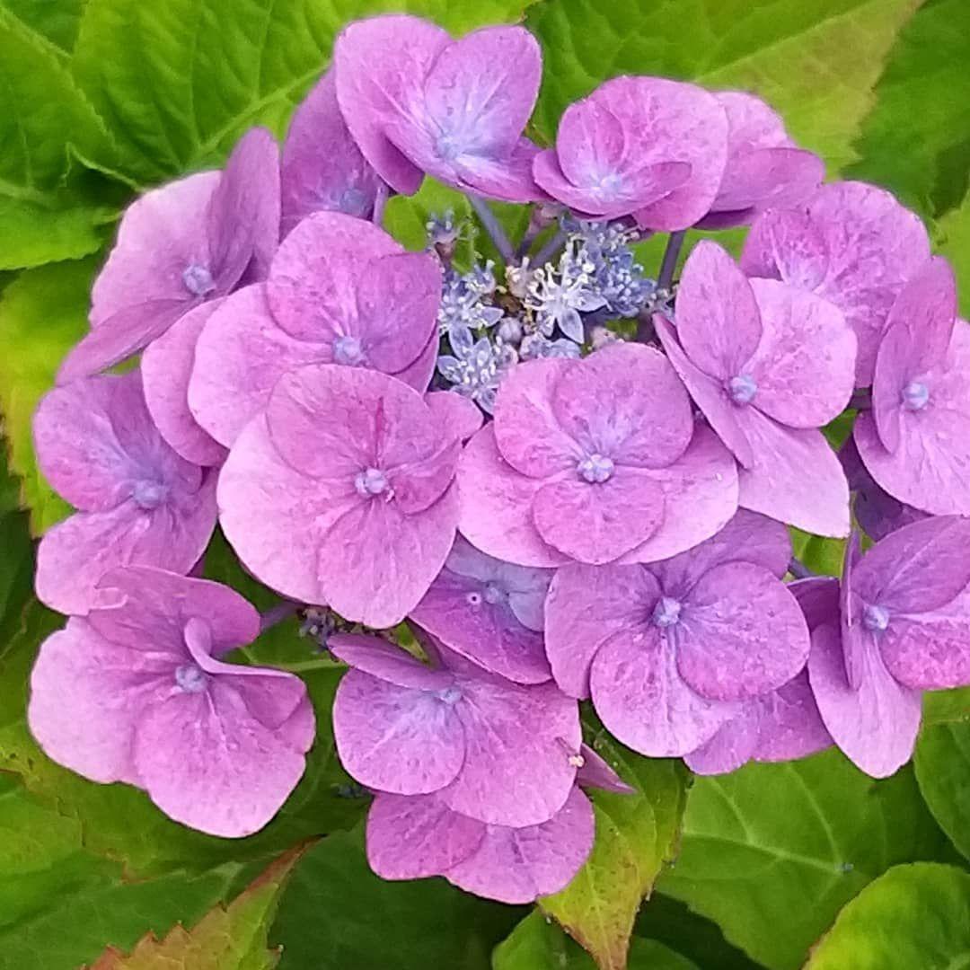 Guten Morgen Meine Lieben Ich Wunsche Euch Einen Schonen Mittwoch Flowers Sommer Gartendeko Garten G In 2020 Schonen Mittwoch Mittwoch Shabby Home