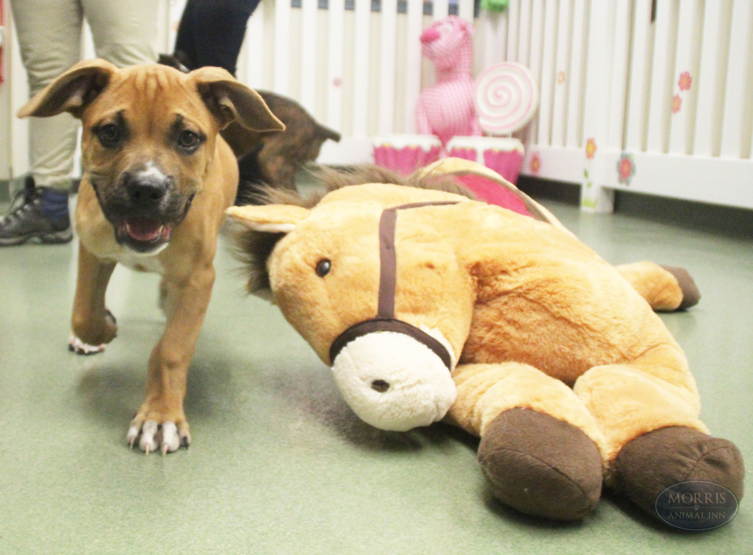 Zeus explores his new environment in the puppy nursery