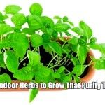 8 Best Indoor Herbs to Grow That Purify The Air