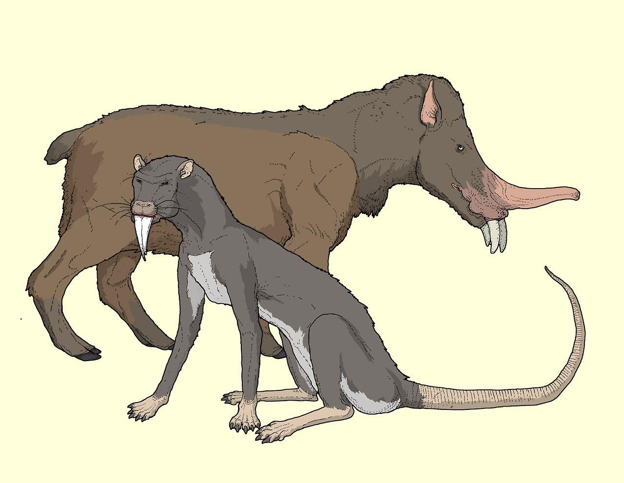C M Kosemen Future Evolution A Predatory Descendant Of