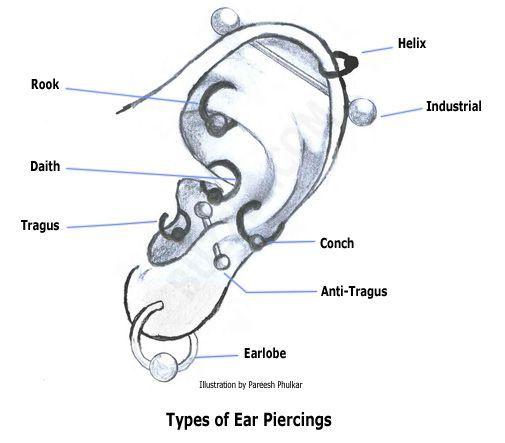 Types of Ear Piercings | Inked | Pierced | Pinterest | Ear ... Ear Piercings Types