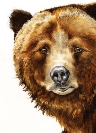 Grizzly bear theres something i like about it - Dessin de grizzly ...
