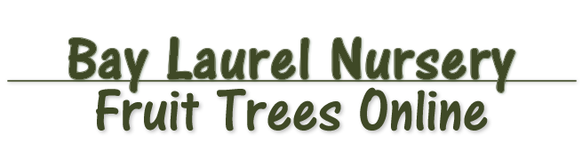 About Bay Laurel Nursery Fruit Trees Online From