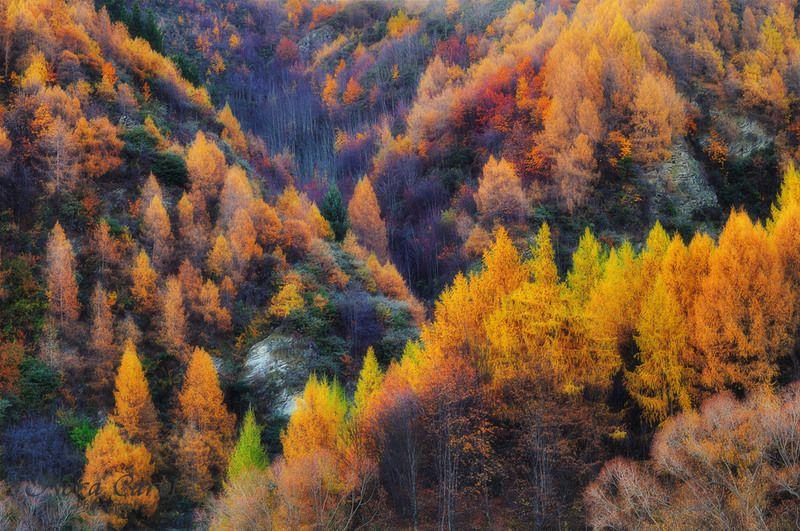 Colors of Autum