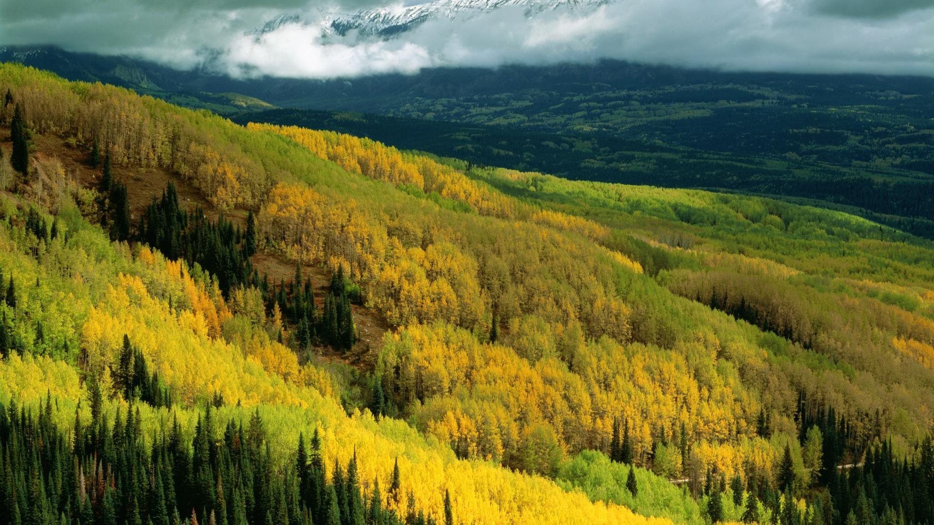 Aspen Forest In Early Fall Ohio Pass Gunnison National Forest Colorado Belle Nature Fond Ecran Nature Fond Ecran Automne