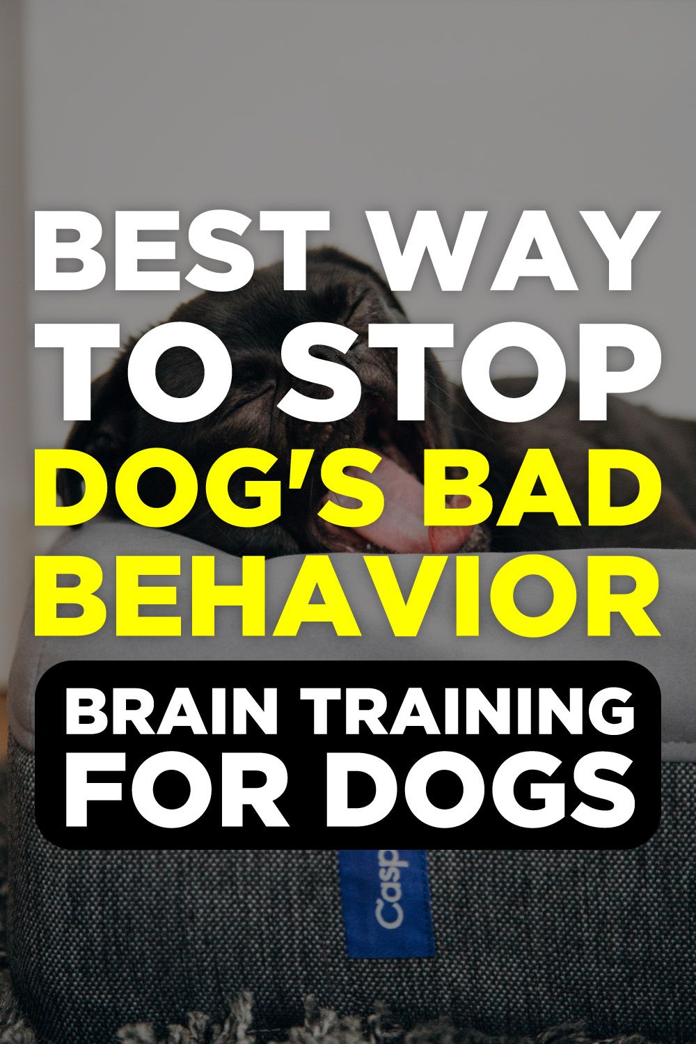 Brain training for dogs review puppy training puppy