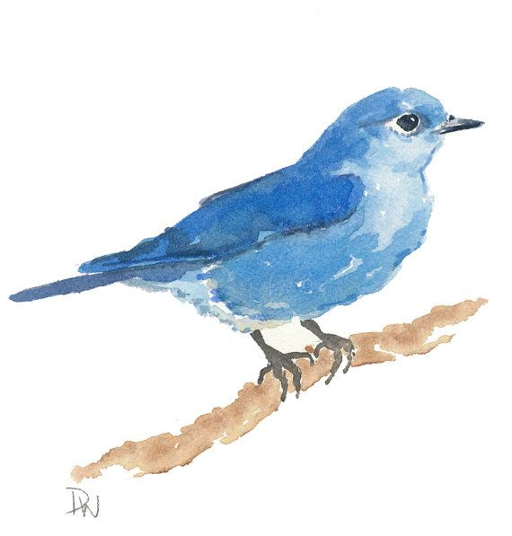 Original Bird Watercolor Mountain Bluebird Nature Art Bird