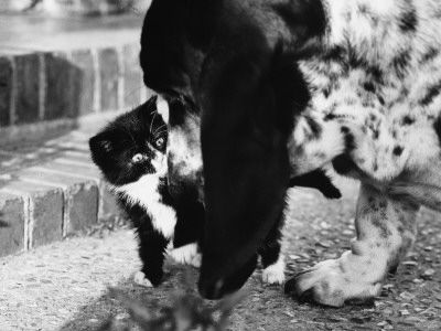 A Kitten Encounters its First Dog!
