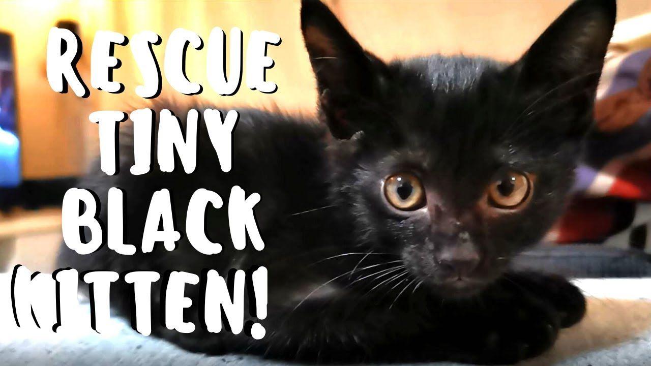 Rescue Tiny Black Kitten From Running Car Engine Bay Little Woody In 2020 Black Kitten Kitten Rescue
