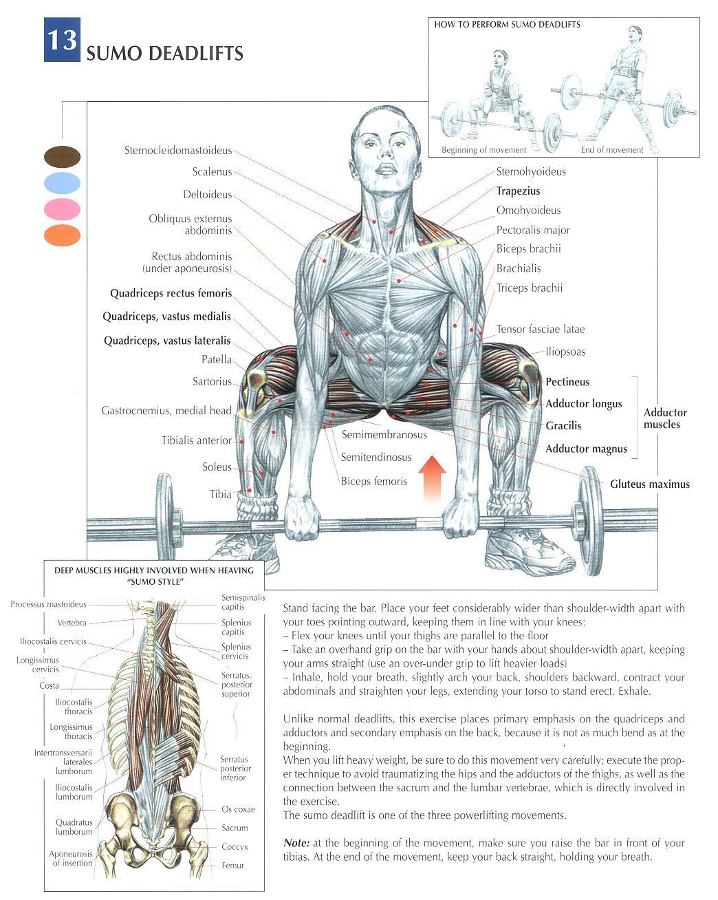 The Anatomy Of Lifting Lots Of Pics Bodybuilding Forums