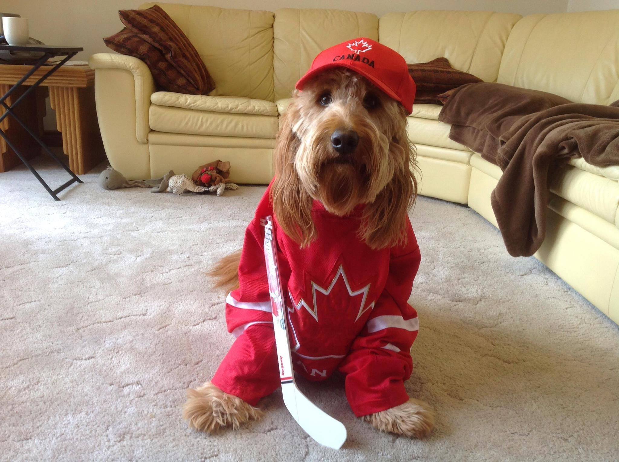 """""""Ringo .. is proud to be a Canadian!"""" Rosie C (With"""