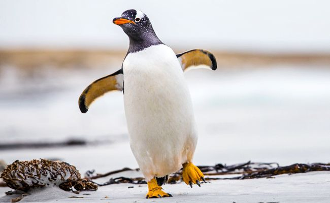 We Now Have a Scientific Excuse to Look at Cute Penguin Pics All Day