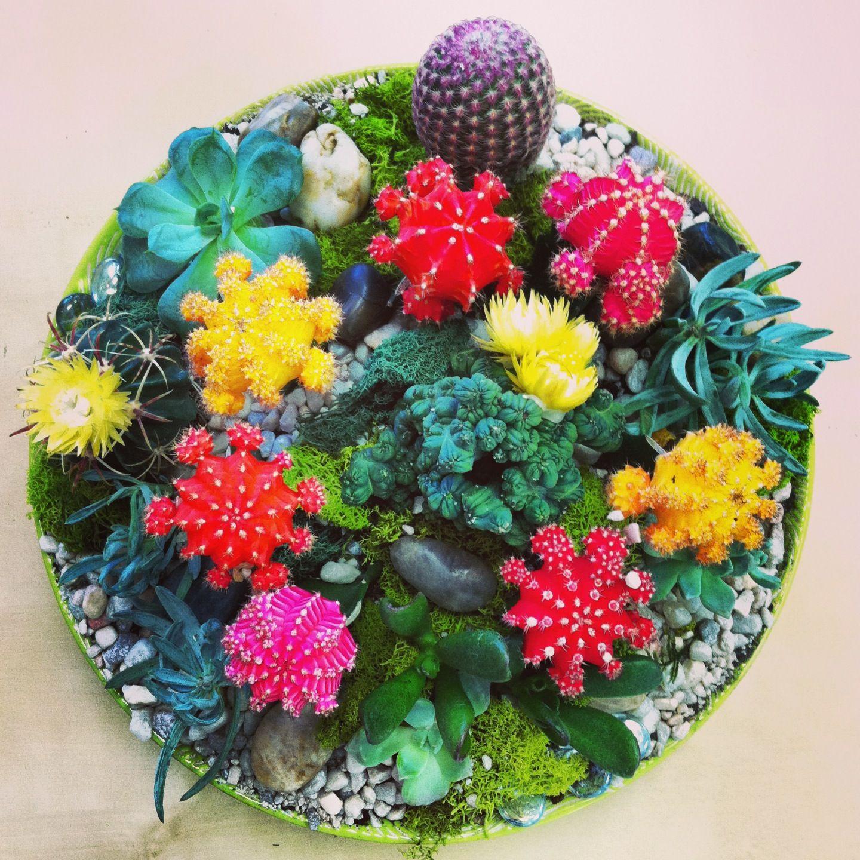 Moon cacti and succulent dish garden In House Garden