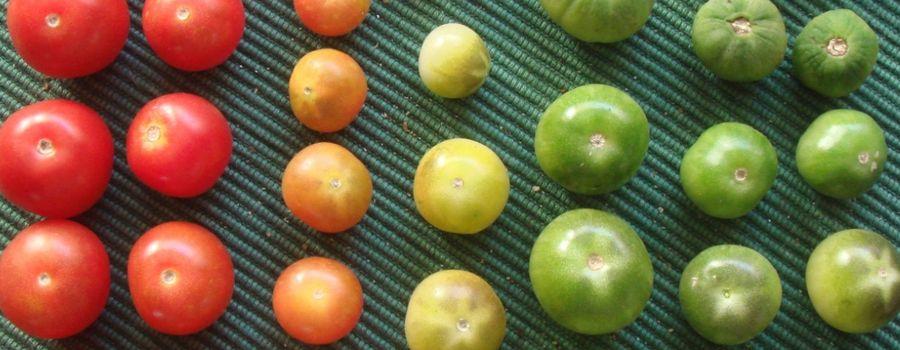 10 Money-Saving Food Preservation Tips | SpouseLink.org