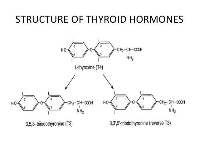 The Top 5 Myths About Natural Desiccated Thyroid