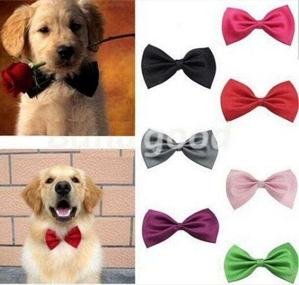 Wonderful Collar Bow Adorable Dog - b13fcab58d6fe8c465192c5dee0f6c64  Perfect Image Reference_855720  .jpg