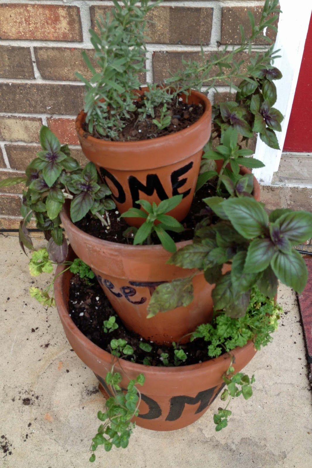 Starting An Herb Garden In Fl With Images Container Herb