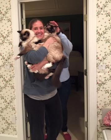 Jenny holding Murphy and Caymus Ragdoll Cats