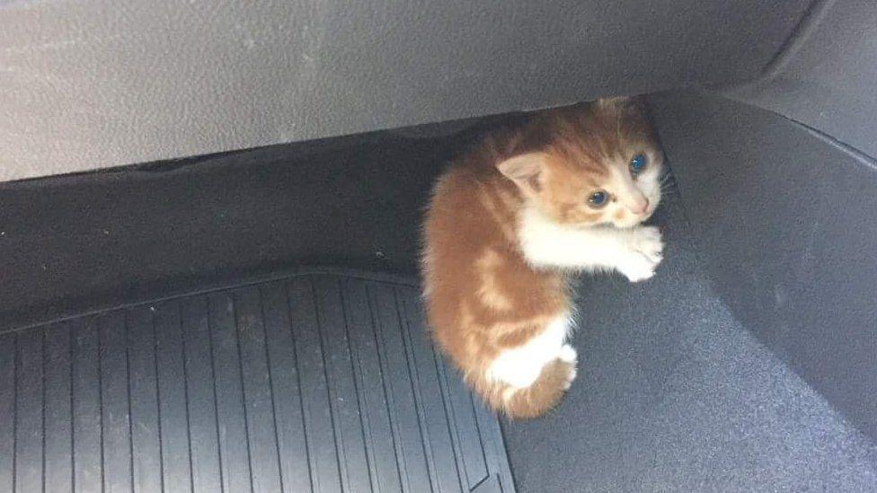 Ball Of Fluff Rescued From Nz Motorway Kitten Rescue Kitten Rescue
